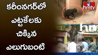 Bear Caught By Karimnagar Rescue Team | కరీంనగర్లో ఎట్టకేలకు చిక్కిన ఎలుగుబంటి | hmtv