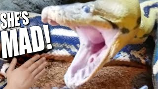 GIANT SNAKE (Lucy) VERY MAD MOVING TO HUGE CAGE **Reptile Zoo** | BRIAN BARCZYK