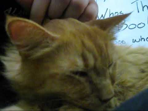 Sarya The Purrfect Snuggler - Adopted! video