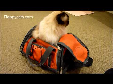 Ragdoll Cat in Sherpa Airline Pet Carrier - ねこ - ラグドール - Floppycats