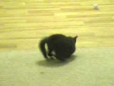 Funny Cute Crazy Kitten