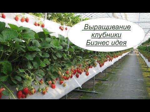 Идеи для выращивания клубники 255