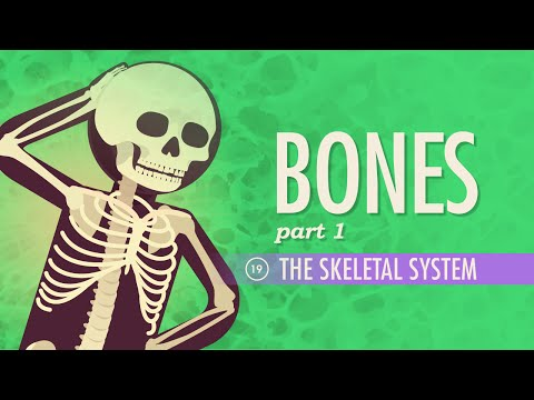 The Skeletal System: Crash Course A&P #19 thumbnail