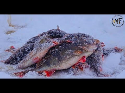Крупный окунь зимой на блесну и балансир. Супер рыбалка 2018 . Озеро Ильмень.