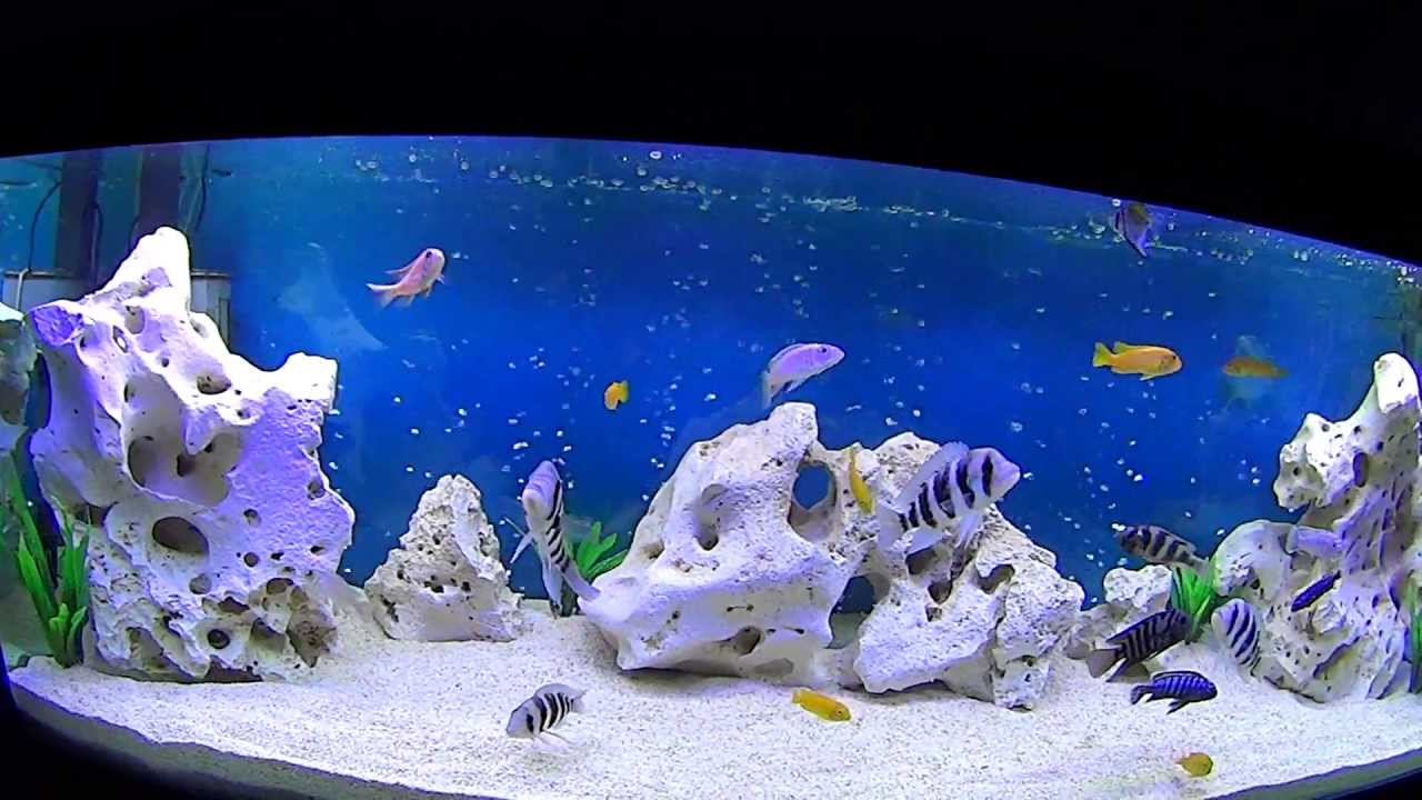 Five Foot Cichlid Fish Tank - YouTube