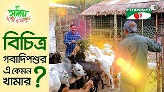 বিচিত্র গবাদিপশুর এ কেমন খামার? | Shykh Seraj | Channel i |
