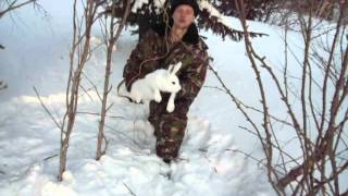 Петля на зайца фото