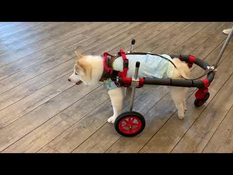 犬種カテゴリー