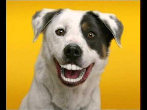 Image Result For Pedigree Dog Food Bad