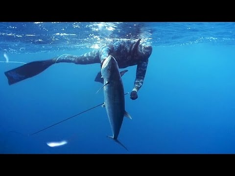 Spearfishing with Rob Allen