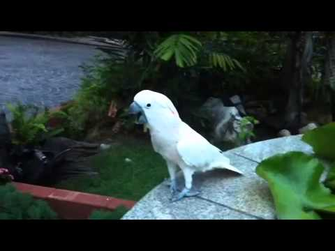 "Doggy ""Moluccan Parrot"" สุดเลิฟ"