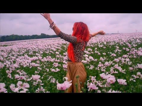 Neon Hitch - Pink Fields (Official Video)