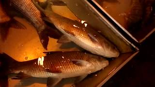 Live Fish Market / Most of The Fishes Are Alive & Fresh / Biggest Whole Sale Bazar   Pet and Animals