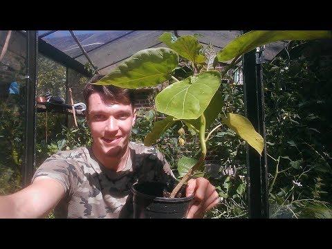 exotische Pflanzen im Nutzgarten anbauen