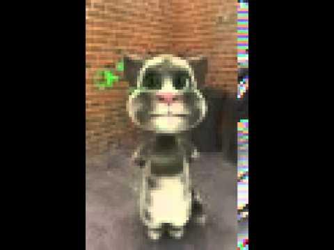 El gato que dice palabrotas