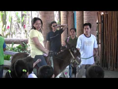 Avilon Zoo! Donkey/Mule riding! Part 7 (March 2008) Philippines