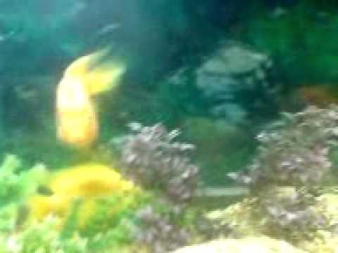 my fish tank quetta