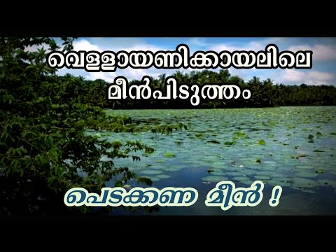 When the flood waters rose to the road levels in the Vellayani lake at Kakkamoola at Trivandrum, Kerala, locals started fishing at the lake using nets and fi...