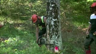 FILIERA CORTA DELL'ABETE BIANCO, gestione sostenibile delle foreste. LEGNOLANDIA