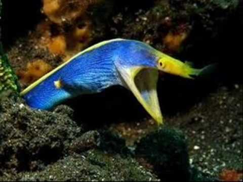 My top 10 favorite saltwater fish youtube for Where to buy saltwater fish