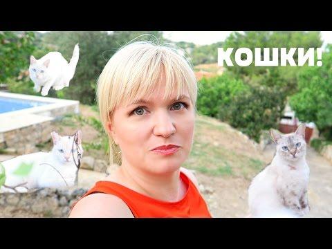 НАШЕСТВИЕ КОШЕК! Дача, шашлыки. Vlog 20.08.2016