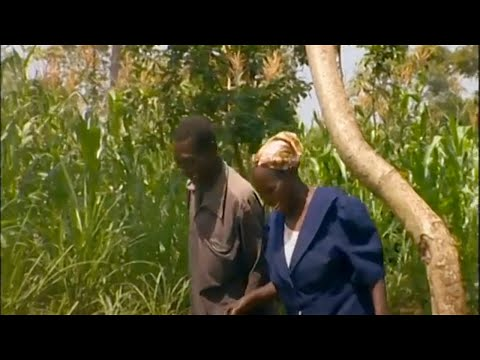 Shamba Shape Up (English) - Cow Care, Push-Pull, Soil Testing Thumbnail