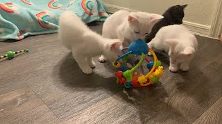 Kittens Play With Baby Toy