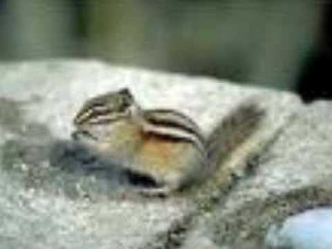 Stronger (chipmunk version)