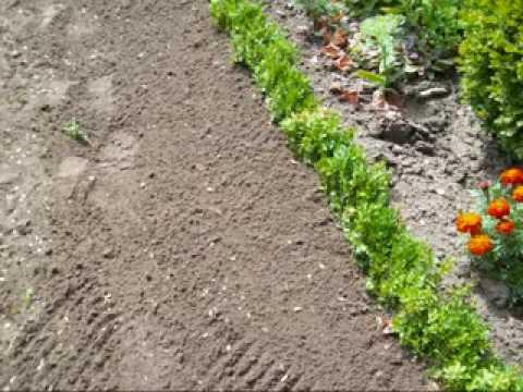 Pflanzanleitung Und Bauerngärten