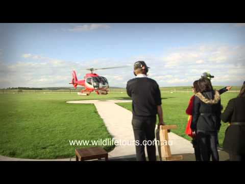 Wildlife Tours Australia Video: