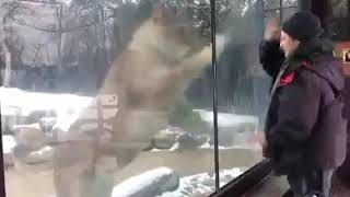 VERY FUNNY EVENTS OF ANIMALS WITH HUMANS