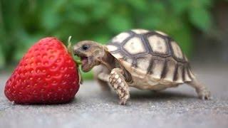Черепахи - Милые и Веселые Черепашки. Видео Сборник - [NEW HD]
