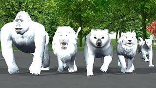White Animals Finger Family Song For Kids,nursery rhymes,Gorilla,Lion,Tiger,Bear,Cheetha,NASHTOON Tv
