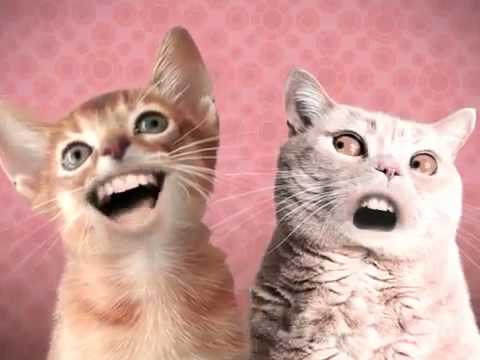 прикол с поющими котами