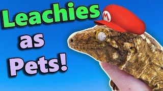Leachianus Geckos: Fun Facts and Care Tips!