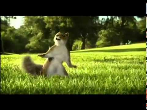 Youtube   Nestle Kit Kat Squirrel Ad Aug 2010 Break Banta Hai   Flv video