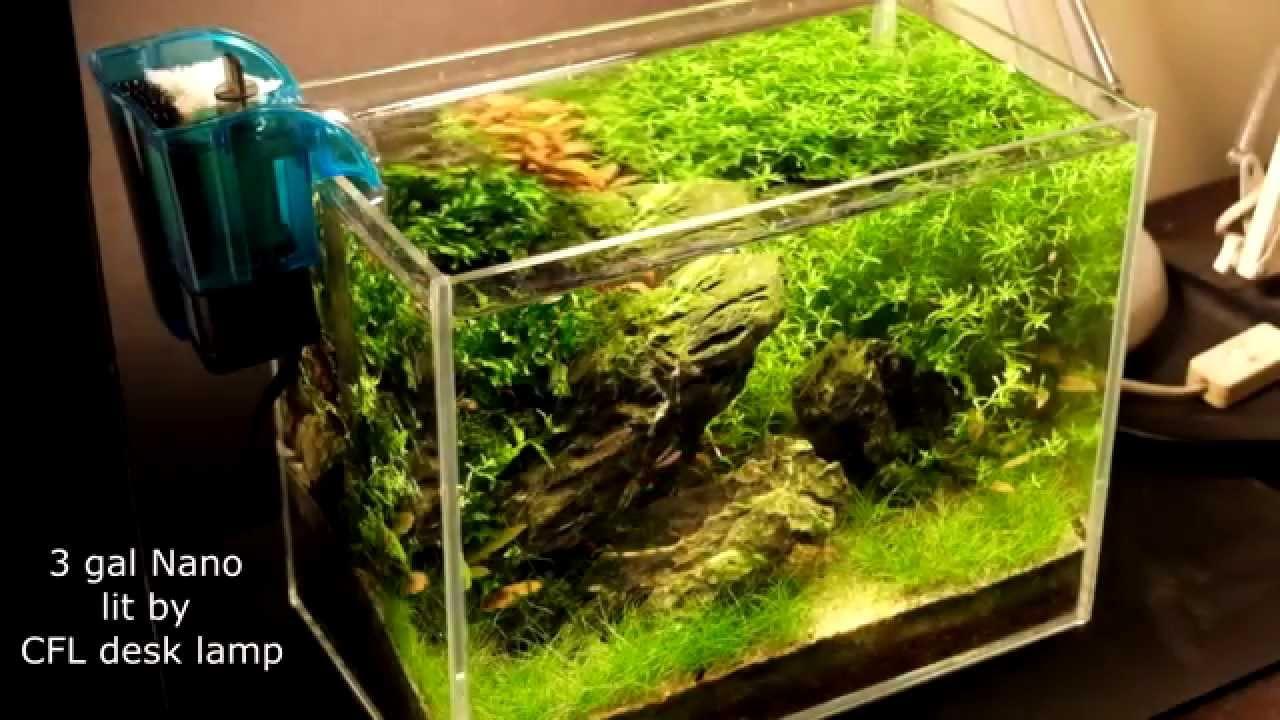 Nano iwagumi planted tank youtube for Plante nano aquarium