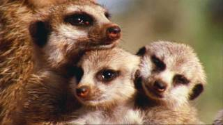 BBC: Attenborough's Wonderful World (HD)