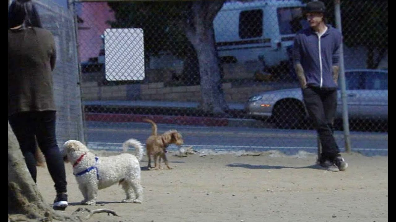 Law Would Allow Bystanders to Smash Car Windows to Free Pets