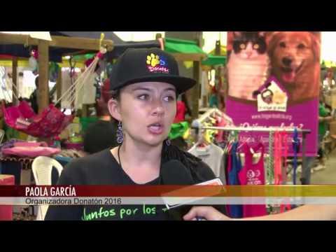 21662 governance 016 002 003 Telemedellín Donatón por los animales en Plaza Mayor Medellín Noticias
