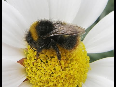 Neonicotinoids MP briefing