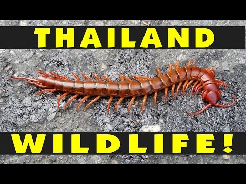 Thailand Wildlife Overview: Monkeys, Snakes, Spiders, Scorpions...