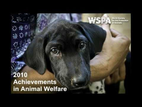With the dedicated support of generous and compassionate members like you, WSPA has brought life-saving care, relief and an end to cruelty to hundreds of tho...