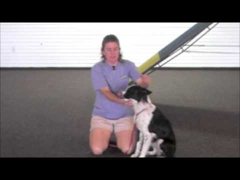 Villa La PAWs - Why Training Dogs on Pressure and Restraint is Important