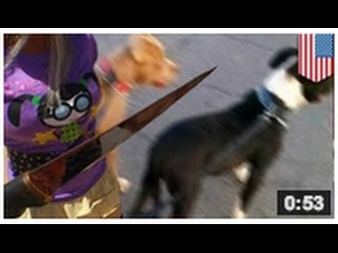 Une femme tue deux pitbulls avec son couteau et une technique de scouts toujours