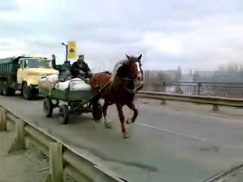 Смех пацана при види лошади на мосту!.mp4