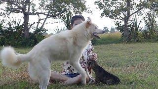 Смешные собаки Приколы про собак Funny Dogs 2019 (Ядерные шутки)