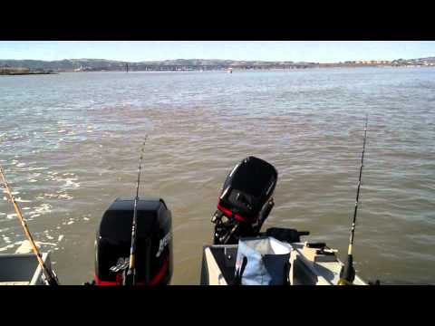 Sturgeon fishing San Pablo bay, catch and release tournament 2012