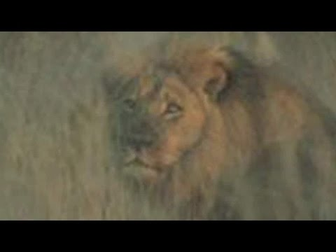 Jericho the lion alive, caring Cecil's for cubs