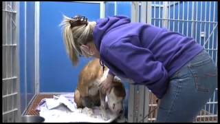 Rescue Story: Dog Shot and Left in Trash Bag Tied to a Fence (January 2013)